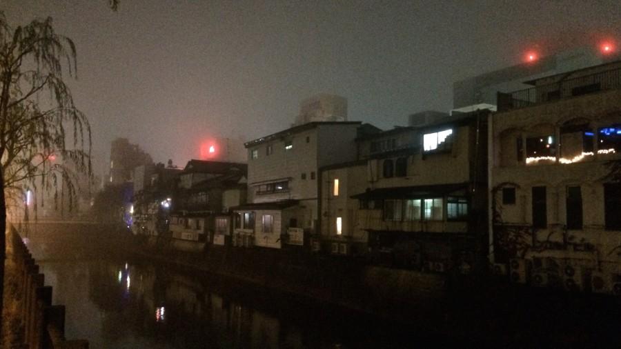 Akita im Nebel