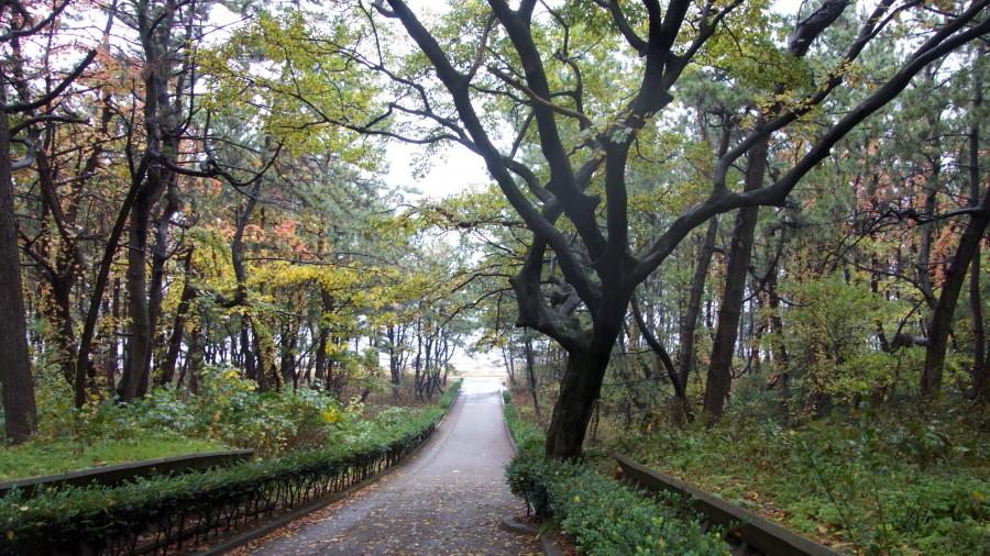 Waldstreifen vor dem Japanischen Meer
